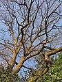 Arboretum Zürich 2014-03-19 17-21-18 (P7800).JPG