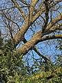 Arboretum Zürich 2014-03-19 17-21-41 (P7800).JPG