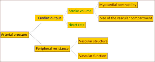 Pathophysiology of hypertension wikipedia a diagram explaining factors affecting arterial pressure ccuart Gallery