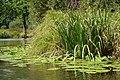 Auray (River)LeLochAmont de la Rivière d'AurayAout2018MorbihanLamiotMF 15.jpg