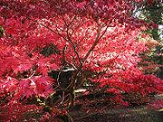Autumn leaves at Westonbirt Arboretum, Gloucestershire, England.