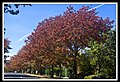 Autumn Leaves begin to fall-022 (5662207965).jpg