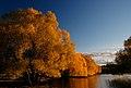 Autumn at Lake Tekapo NZ (23) (8671206664).jpg