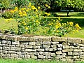 Autumn sun - geograph.org.uk - 1481401.jpg
