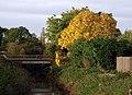 Autumnal Tree next to Burstwick Drain - geograph.org.uk - 1013669.jpg