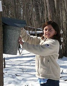 A young girl in a white fleece jacket in a forest collecting maple sap in a bucket