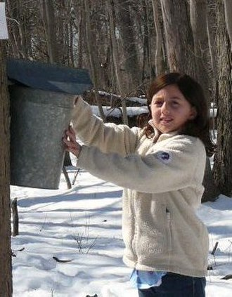Avery Coonley School -  A second group student collecting sap for maple syrup in the Forest Preserve, the culmination of her study of trees