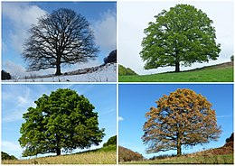 Four temperate and subpolar seasons. Winter, Spring Summer, Autumn/Fall