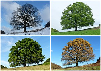 Season - Four temperate and subpolar seasons Winter, Spring Summer, Autumn/Fall