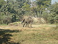 Babyelephant lko zoo2.JPG