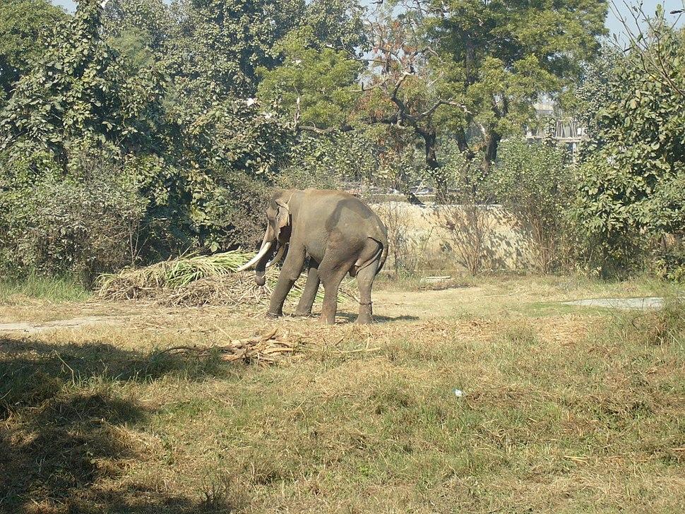 Babyelephant lko zoo2