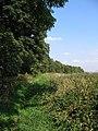Badger Hills, Bridleway - geograph.org.uk - 554725.jpg