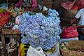Bali market, hydrangea.jpg