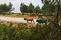Baltar, Province of Ourense, Spain - panoramio (8).jpg