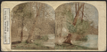 Banks of the Niagara, view from Goat Island, from Robert N. Dennis collection of stereoscopic views.png