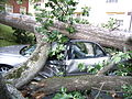 Barcroft 1100 Thomas St Car Damaged by Tree (4) (7536694248).jpg