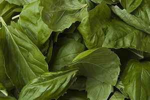 English: Basil leaves (Ocimum basilicum).
