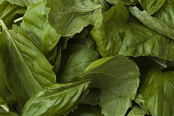 Basil leaves.jpg