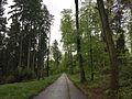 Bassersdorf Forest.jpg