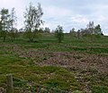 Beacon Hill Earthworks - geograph.org.uk - 409990.jpg