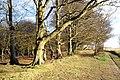 Beaconhill Beeches - geograph.org.uk - 831586.jpg