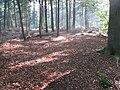 Beetsterzwaag - panoramio.jpg