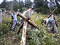 Bergwaldprojekt 4.jpg