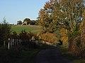 Between Itchel and Park Corner - geograph.org.uk - 282118.jpg