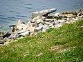 Beylikdüzü Sahil - Gelincikler ve Sürreal Merdiven, Mayıs 2014 - panoramio.jpg