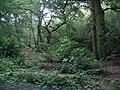 Big Wood - geograph.org.uk - 498555.jpg