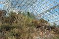 Biosphere 2015 01 18 0323.jpg
