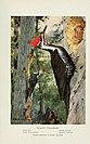 Bird-lore (1917) (14569058190).jpg