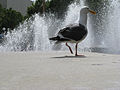 Birds of San Francisco-2.jpg