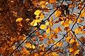 Blätter im Herbst.jpg
