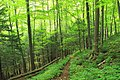 Black Forest Trail (Revisited) (15) (21189389432).jpg