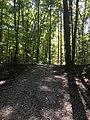 Blendon Woods Metro Park October 2018 12.jpg