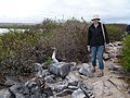 Blue Footed Boobies - Espanola - Hood - Galapagos Islands - Ecuador (4871490526).jpg