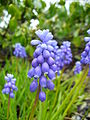 Blueflowers6.jpg
