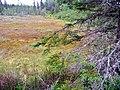 Bog near Kinkora, PEI (7423086184).jpg