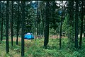 Boise NF Campground.jpg