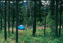 Photo of a tent and campsite through pine trees