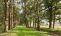 Bomenlaan in mild avondlicht. Locatie, het Katlijker Schar (Ketliker Skar) 02.jpg