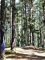 Bosque de Oma (13).JPG