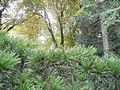 Botanička bašta Jevremovac 010.JPG