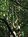 Botanični vrt (3990160313).jpg