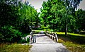 Bridge Between Trees (114072349).jpeg