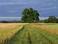 Bridleway, Warborough - geograph.org.uk - 1391713.jpg