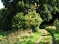 Bridleway along the west border of Killerton woods - geograph.org.uk - 966045.jpg