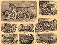 Brockhaus and Efron Encyclopedic Dictionary b31 472-2.jpg