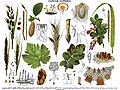 Brockhaus and Efron Encyclopedic Dictionary b7 336-0.jpg